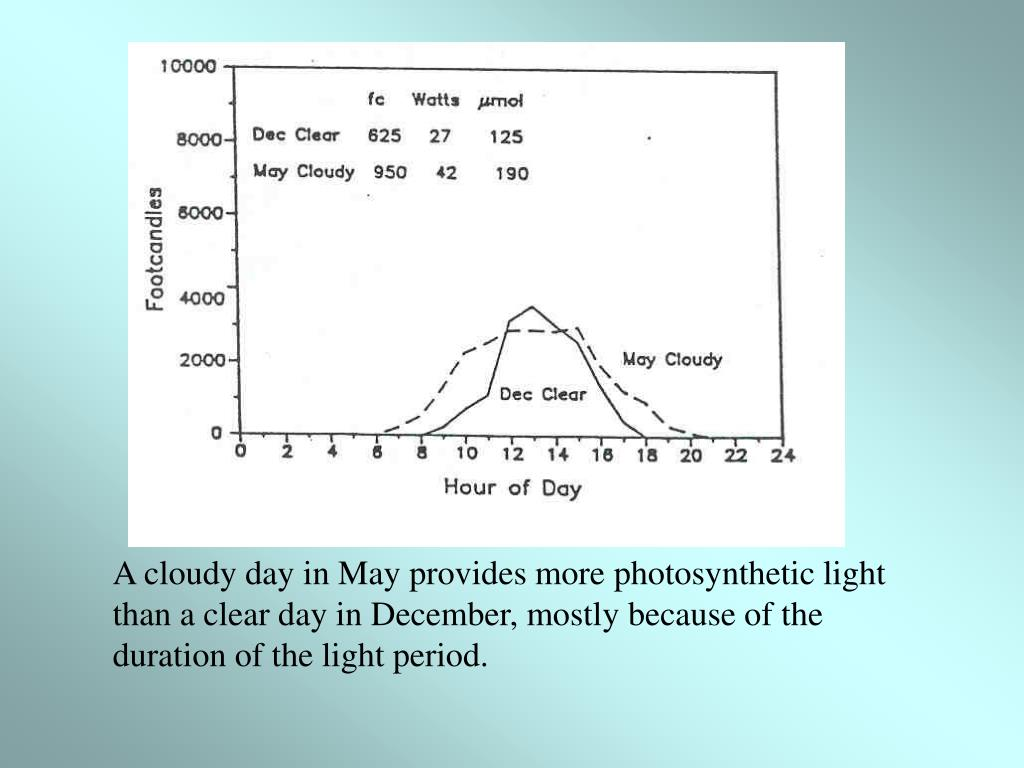 A cloudy day in May provides more photosynthetic light than a clear day in December, mostly because of the duration of the light period.