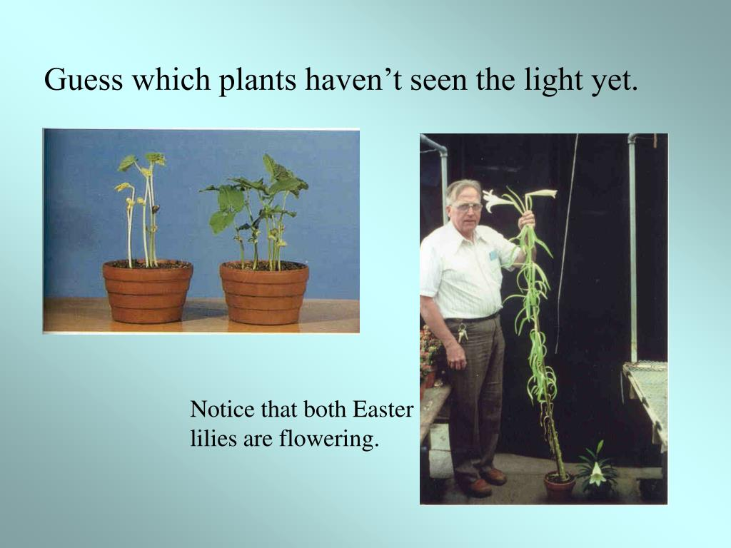 Guess which plants haven't seen the light yet.