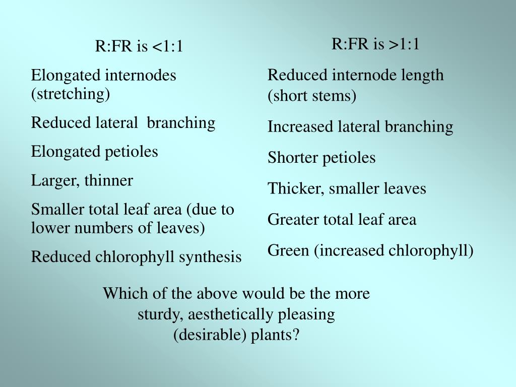 R:FR is >1:1