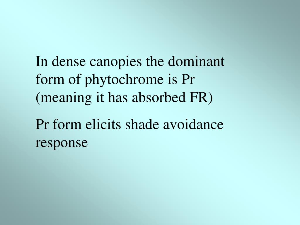 In dense canopies the dominant form of phytochrome is Pr (meaning it has absorbed FR)