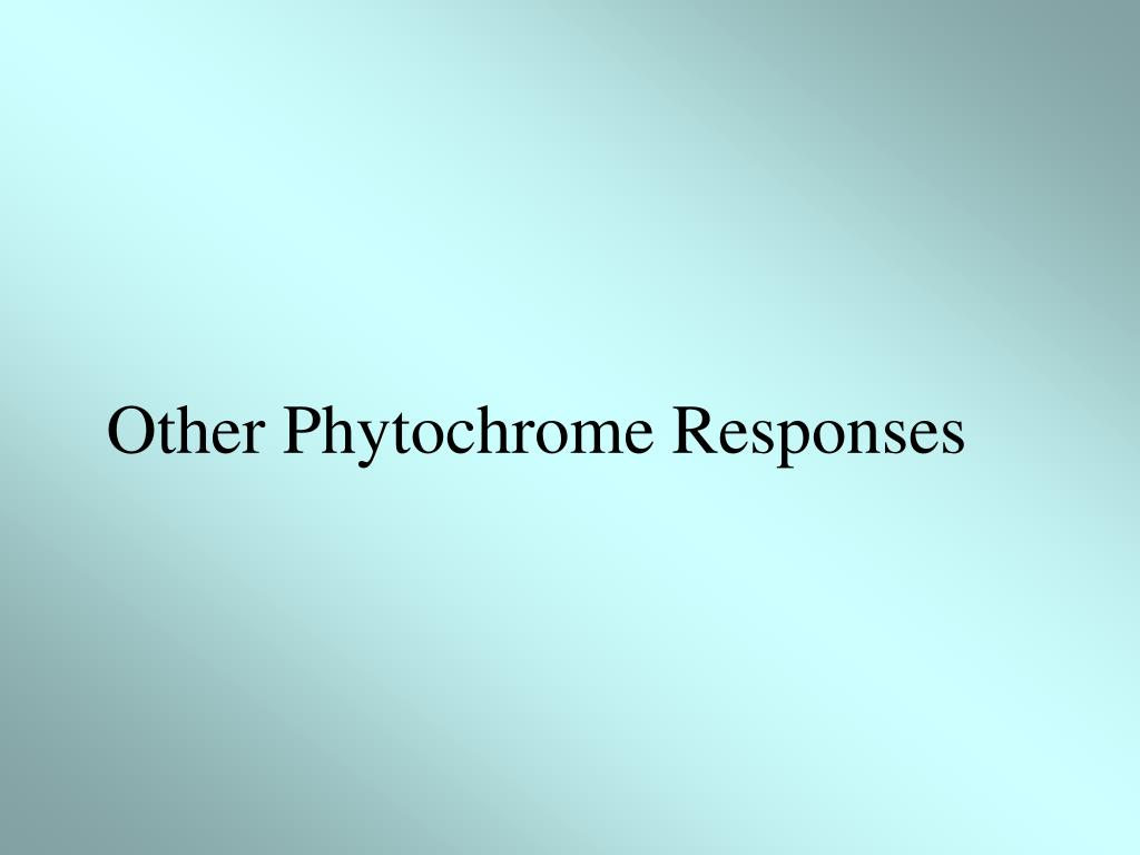 Other Phytochrome Responses