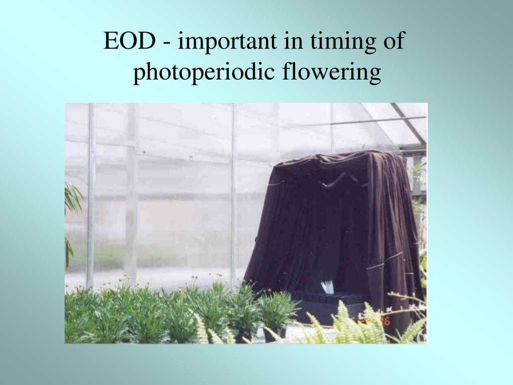 EOD - important in timing of