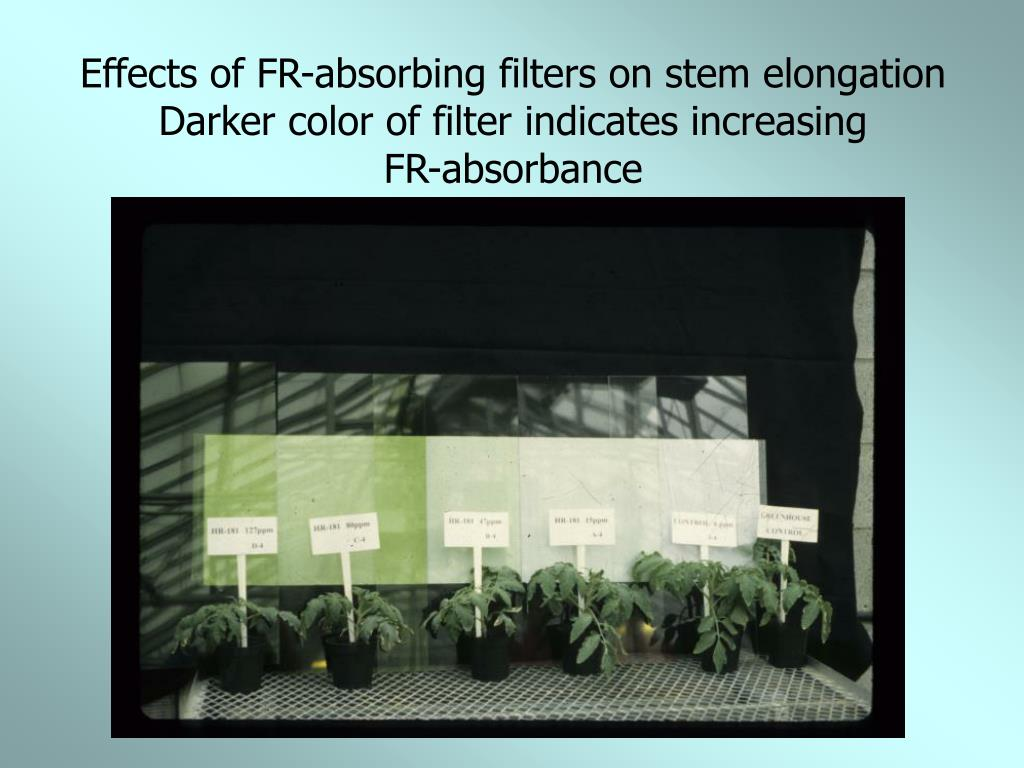 Effects of FR-absorbing filters on stem elongation