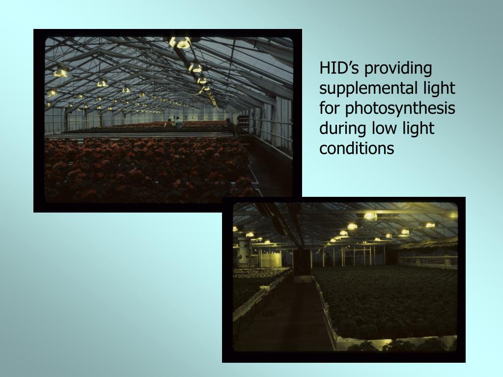 HID's providing supplemental light for photosynthesis during low light conditions