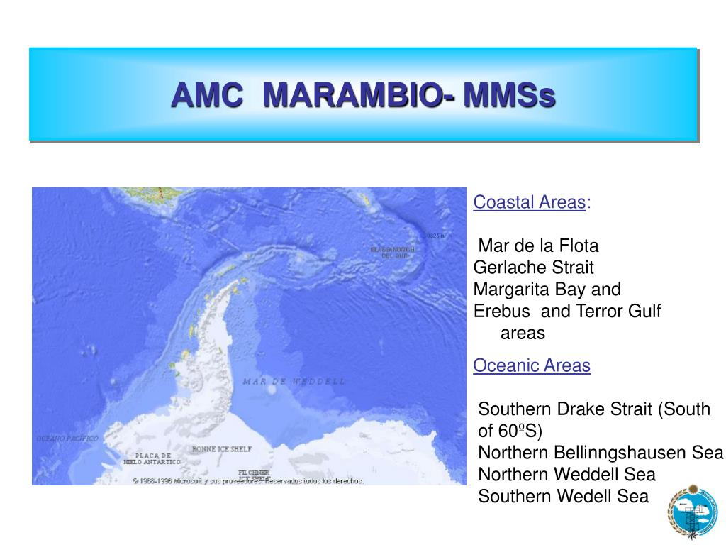 AMC  MARAMBIO- MMSs