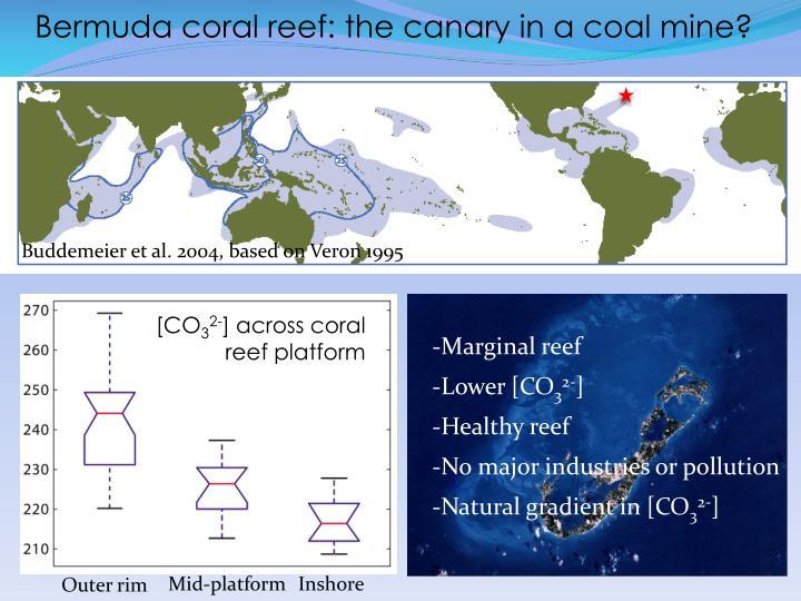 Bermuda coral reef: the canary in a coal mine?