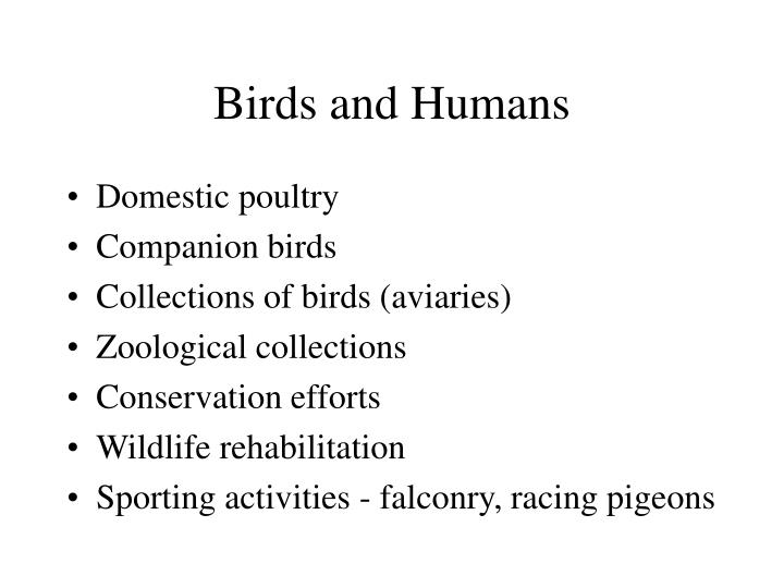 Birds and humans