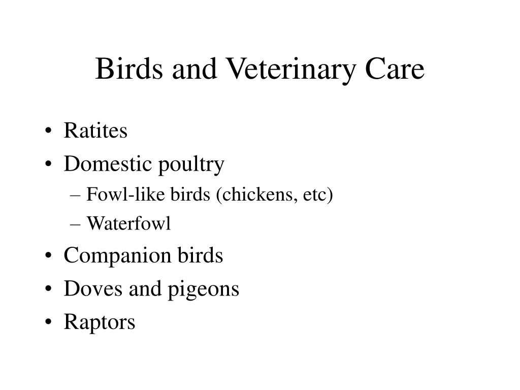 Birds and Veterinary Care