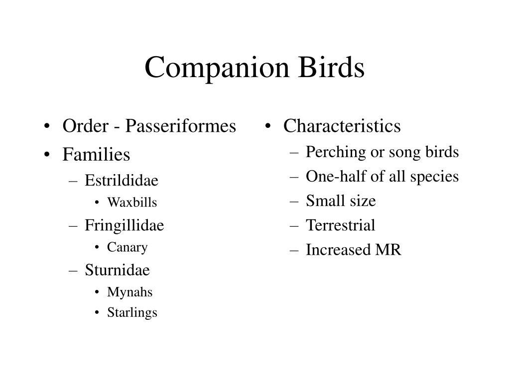 Order - Passeriformes