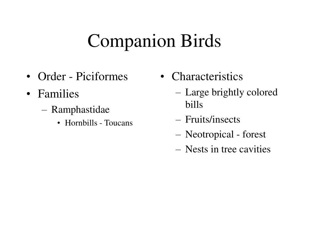Order - Piciformes
