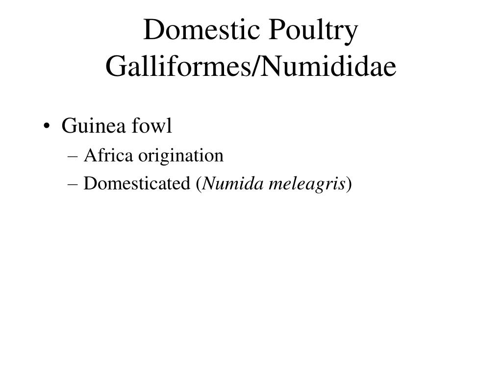 Domestic Poultry