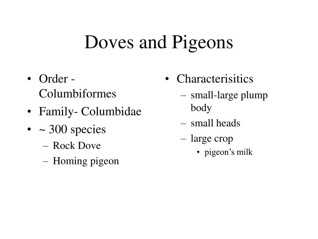 Order - Columbiformes