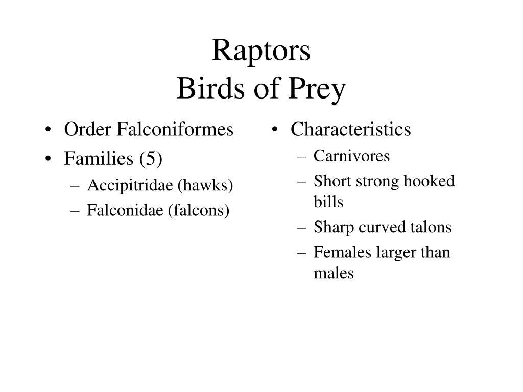Order Falconiformes