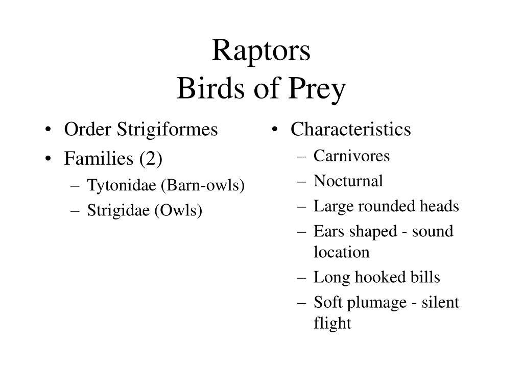 Order Strigiformes