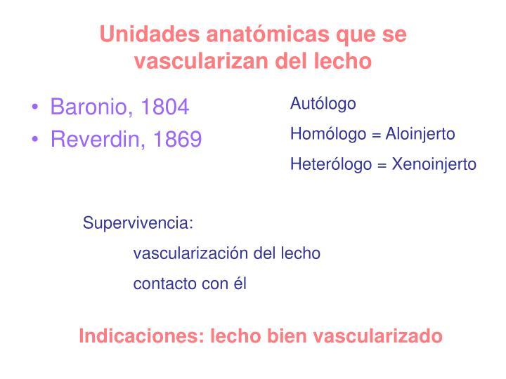 Unidades anatmicas que se vascularizan del lecho
