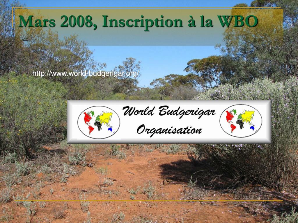 Mars 2008, Inscription à la WBO
