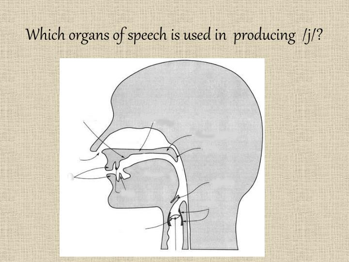 Which organs of speech is used in producing j