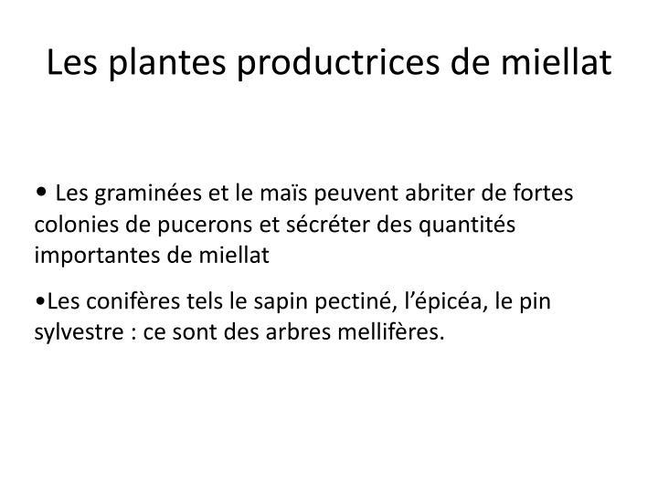 Les plantes productrices de miellat