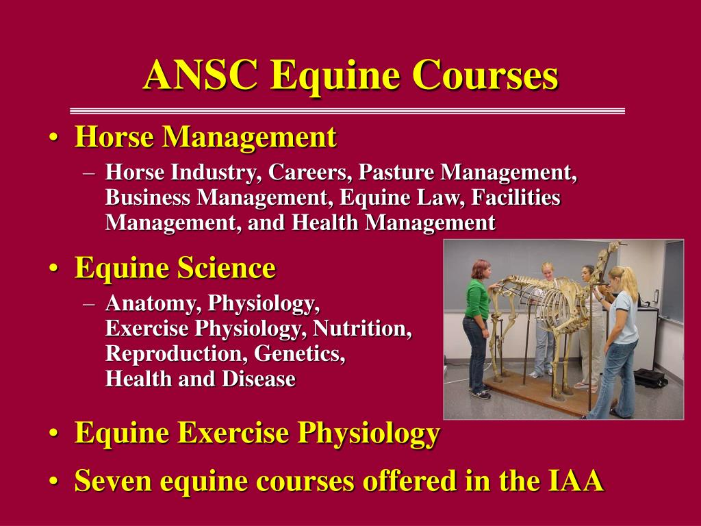 ANSC Equine Courses