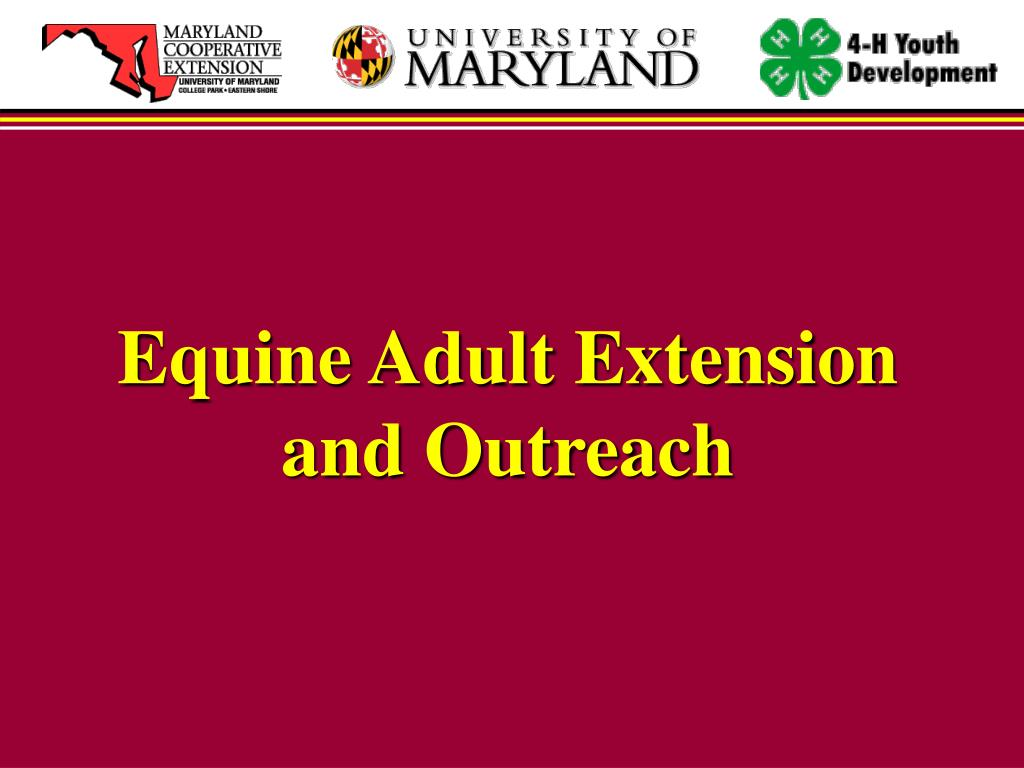 Equine Adult Extension