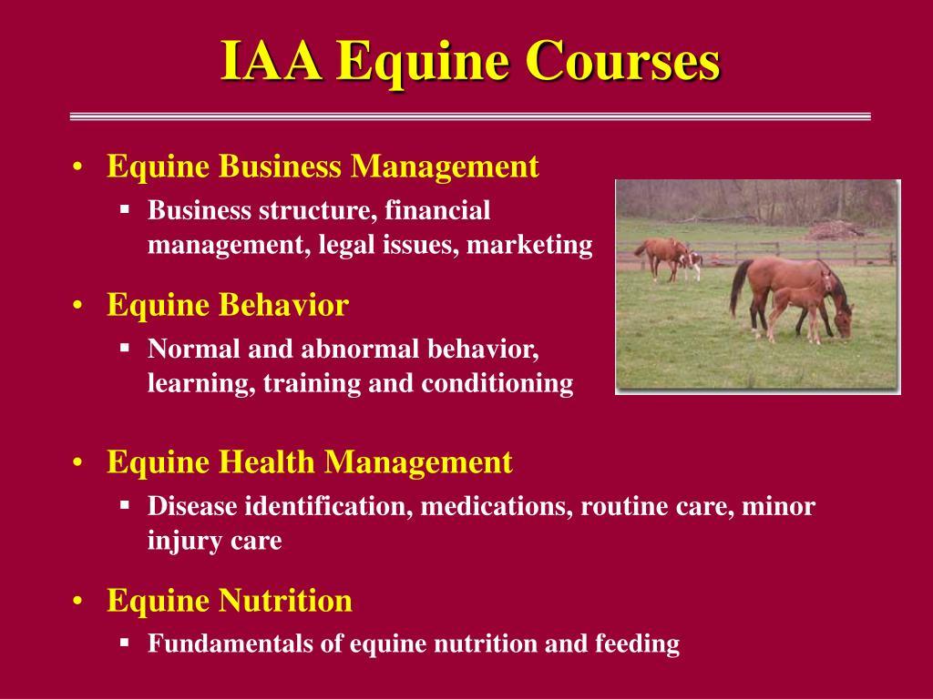 IAA Equine Courses
