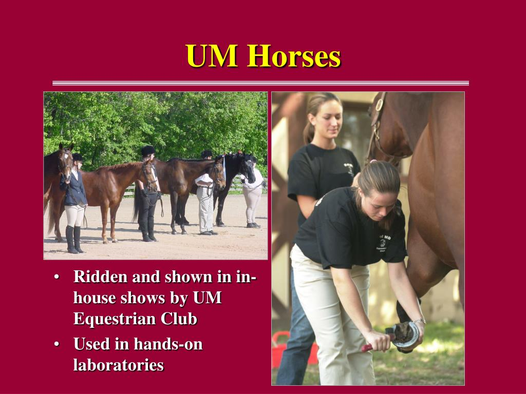 Ridden and shown in in-house shows by UM Equestrian Club