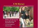 um horses