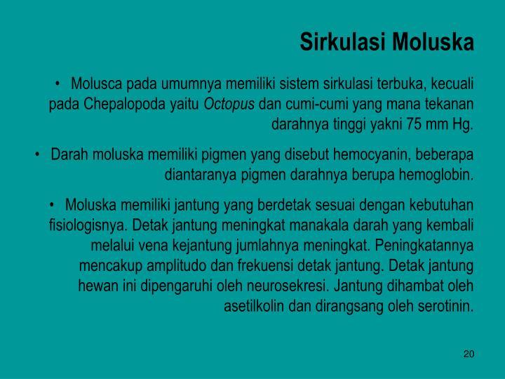 Sirkulasi Moluska