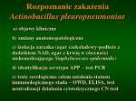 rozpoznanie zaka enia actinobacillus pleuropneumoniae