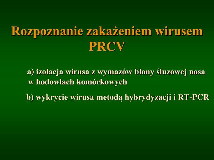 Rozpoznanie zakażeniem wirusem PRCV