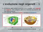 l evoluzione negli organelli 1