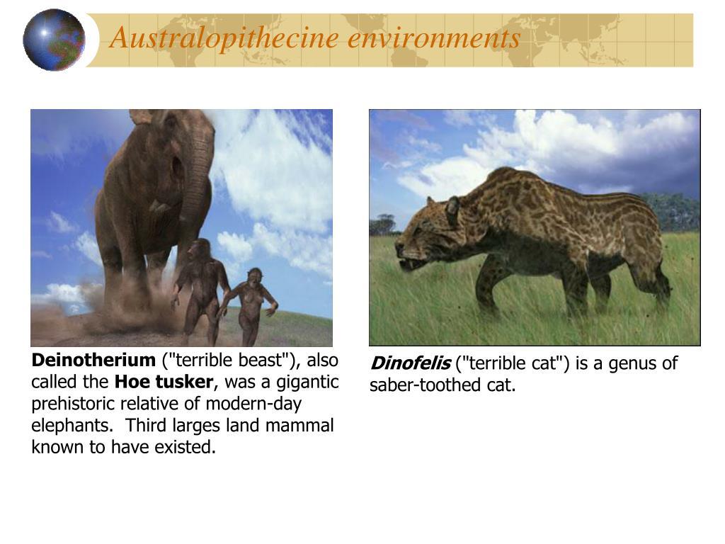 Australopithecine environments