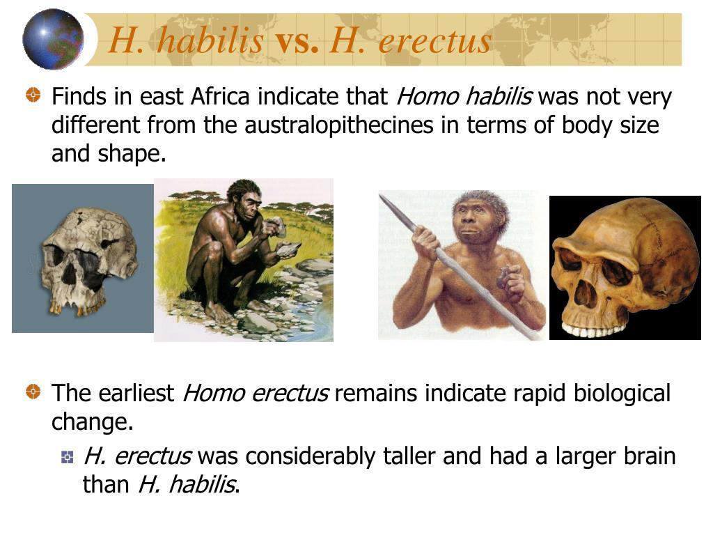 H. habilis