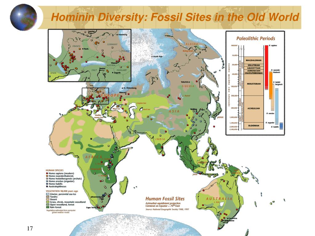 Hominin Diversity: Fossil Sites in the Old World