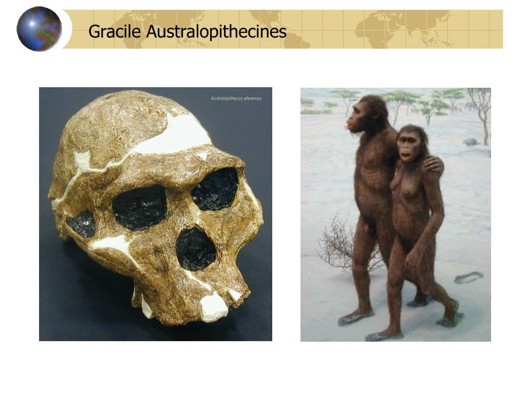Gracile Australopithecines