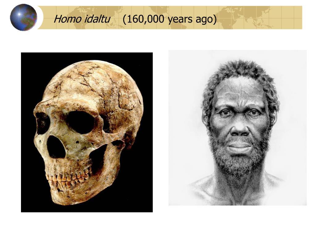 Homo idaltu