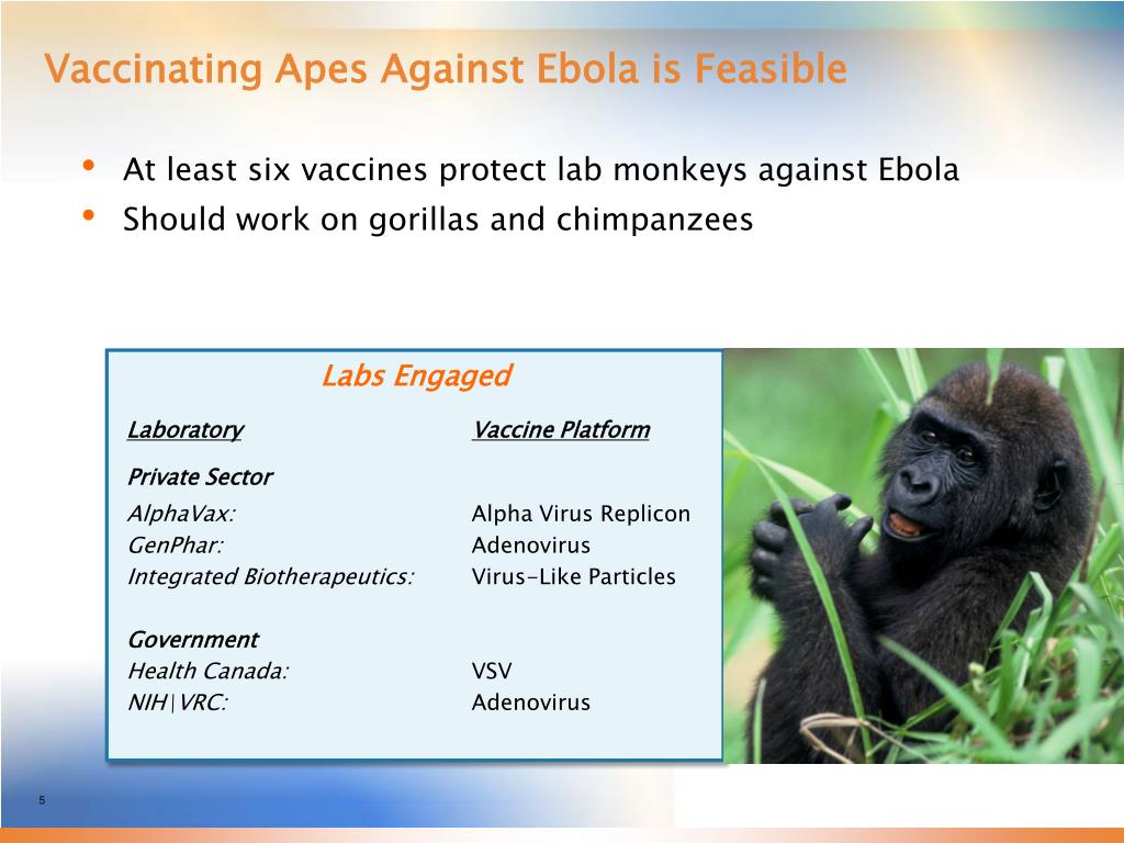 Vaccinating Apes Against Ebola is Feasible
