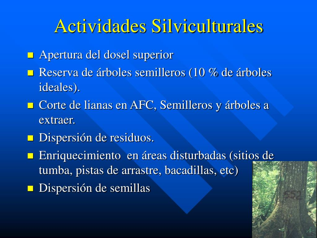 Actividades Silviculturales