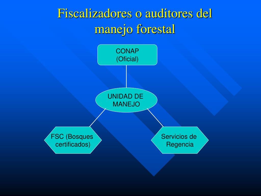 Fiscalizadores o auditores del
