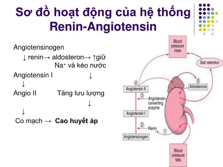 Sơ đồ hoạt động của hệ thống Renin-Angiotensin