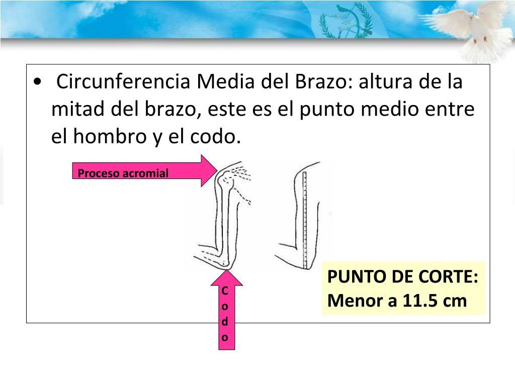 Circunferencia Media del Brazo: altura de la mitad del brazo, este es el punto medio entre el hombro y el codo.