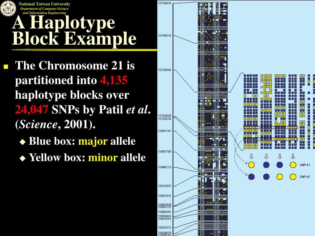 A Haplotype