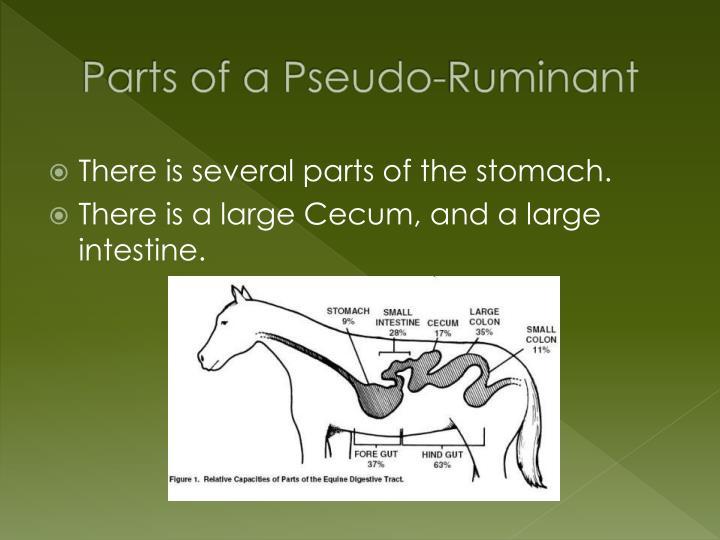 Parts of a Pseudo-Ruminant