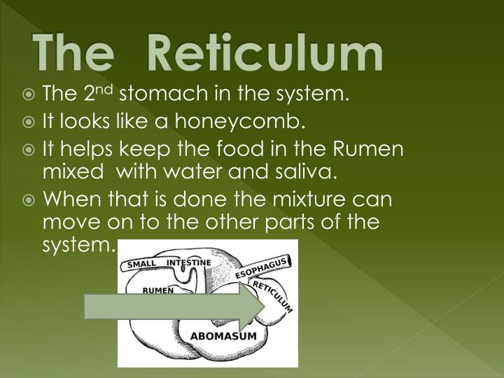 The  Reticulum