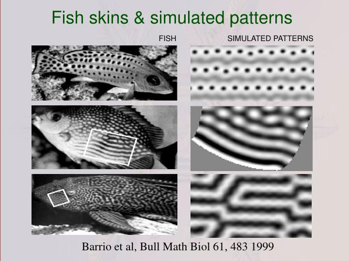 Fish skins & simulated patterns