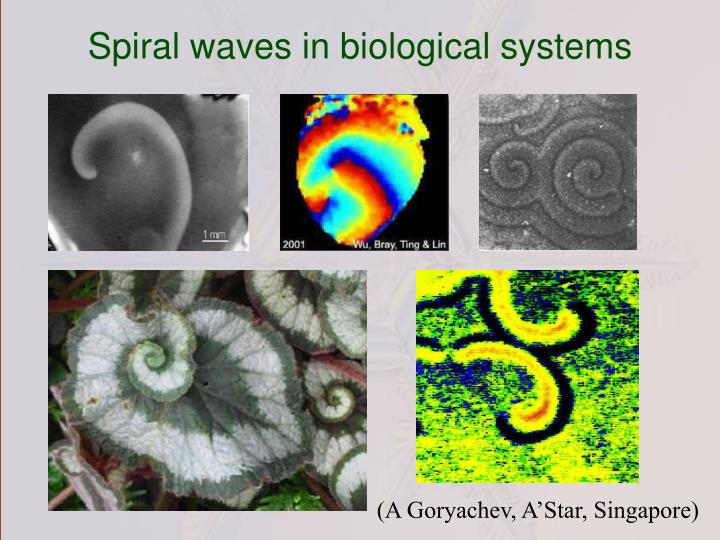 Spiral waves in biological systems