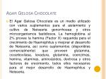 agar gelosa chocolate