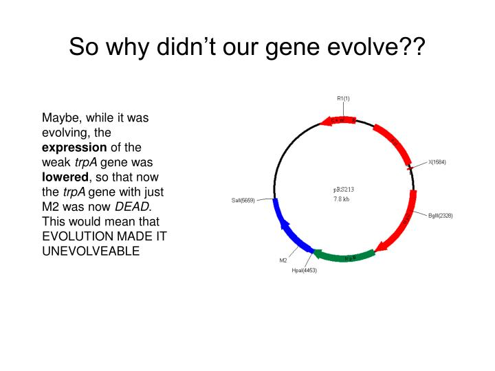 So why didn't our gene evolve??