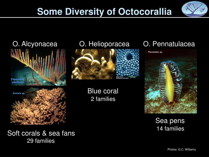 Some Diversity of Octocorallia
