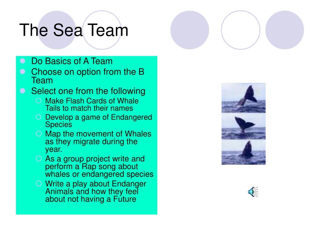 The Sea Team